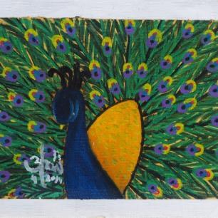 Peacock de Panamá by 3fraín Antonio